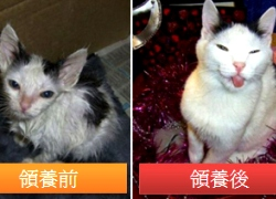 20110317寵物專欄