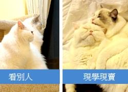 2011寵物專欄用
