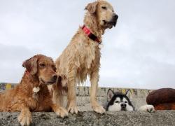 20110526寵物專欄