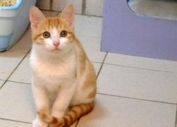 寵物專欄20110225