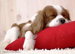 狗狗得憂鬱症了嗎
