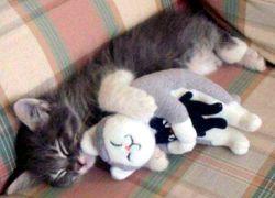 20110516寵物專欄