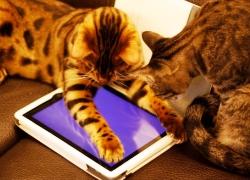 20110221寵物專欄