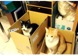 20110120痞客邦寵物專欄
