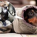 20110530寵物專欄