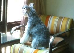 20110601寵物專欄