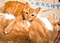20110224寵物專欄