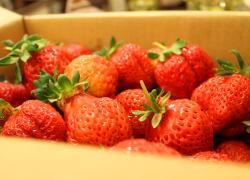 美食02-新鮮草莓當日送.jpg