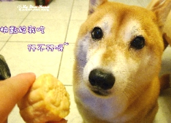 狗吃的月餅比人還高級?