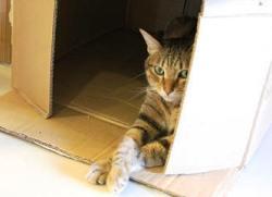 節儉的好貓咪