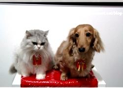 2011痞客邦寵物專欄