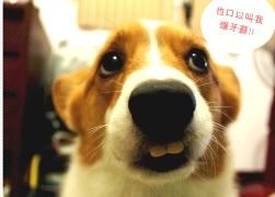 20110307寵物專欄