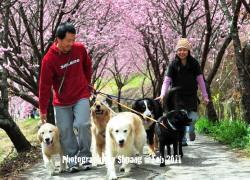 20110428寵物專欄