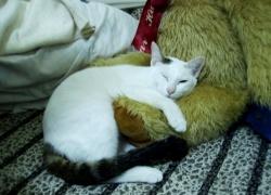 這是貓熊抱