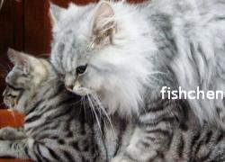 20110321寵物專欄