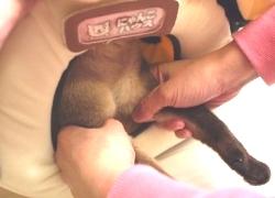 20110328寵物專欄