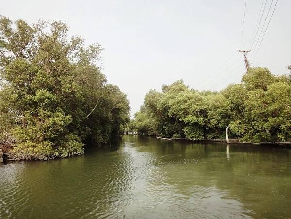 大鵬灣-紅樹林.JPG
