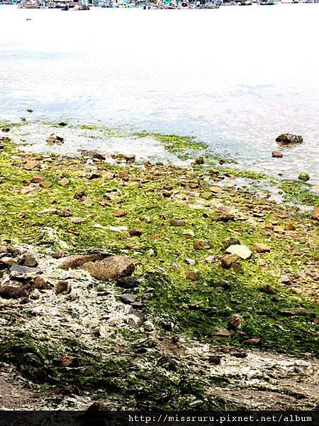 0414-南ㄚ島海藻