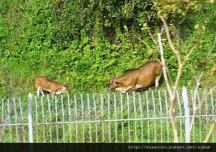 0412-有牛的香港