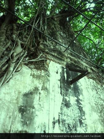 安帕瓦水上市場-5+1廟遊船-廟6-樹中廟2