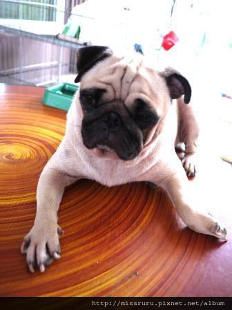 BKK-總是在外面桌上的狗阿嬤