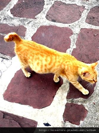 臥佛寺-貓貓很自在的城市
