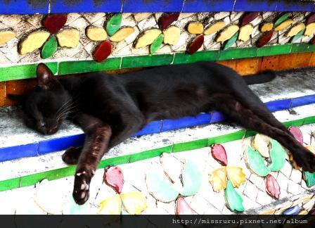 臥佛寺-大家都以為她死掉的貓