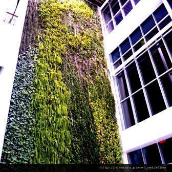 BIG C-這片牆是真的蕨類