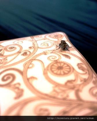 ERAWAN下午茶-好放肆的蒼蠅