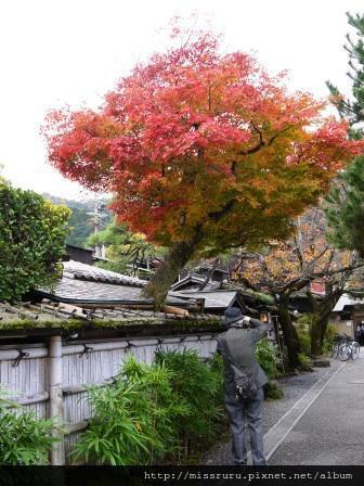 32-嵐山楓葉與照相阿伯