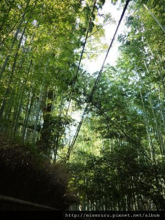 77-嵐山傳說中的竹林