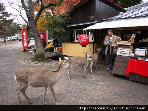 守在鹿餅商店旁的鹿