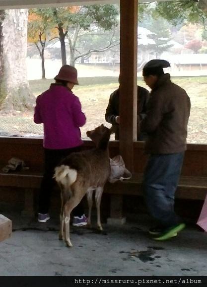 涼亭中餵鹿吃橘子的台灣同胞