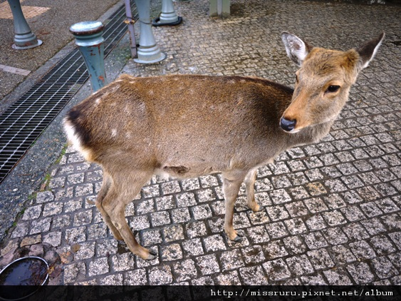 跑到馬路上來的鹿--再見囉