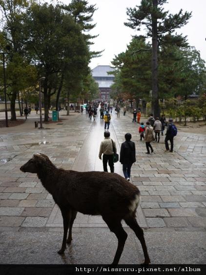 話說奈良的鹿是神的使者