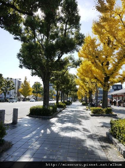 姬路城前馬路的銀杏大道2