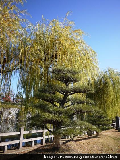 姬路城護城河旁垂柳與松樹