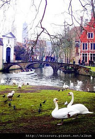 天鵝與小橋