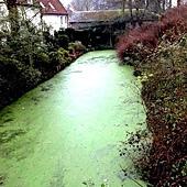 好綠的小河