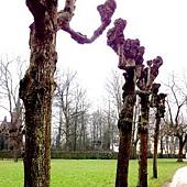 奇怪的ㄓ形樹