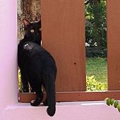 黑貓.JPG