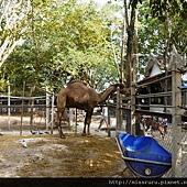河邊是僧侶開的動物園.JPG