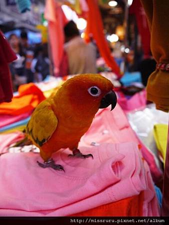 老闆拿出他的愛鸚鵡.JPG