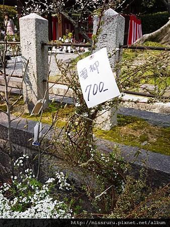 賣花草的市集
