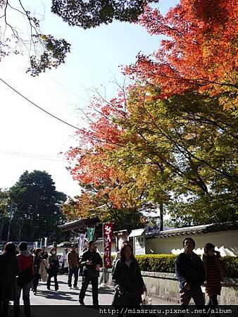 東福寺路上楓葉已紅.JPG