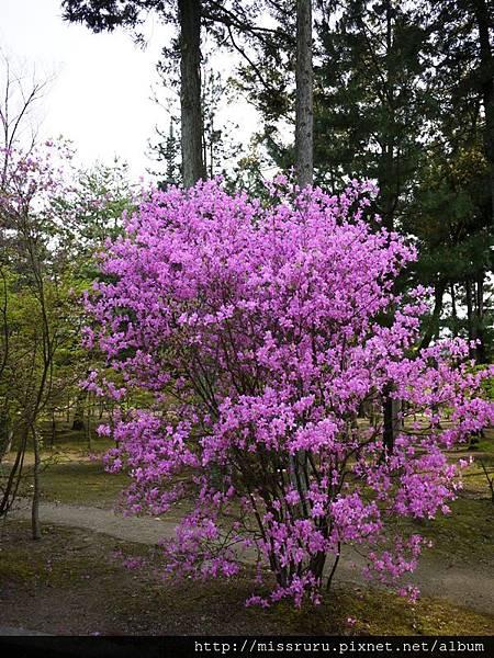 紫的不可思議.JPG