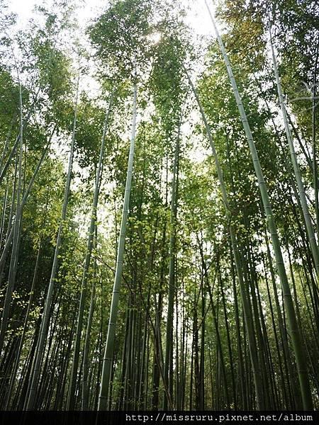 竹林.JPG