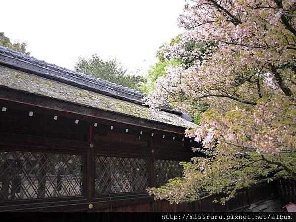 平野神社5.JPG