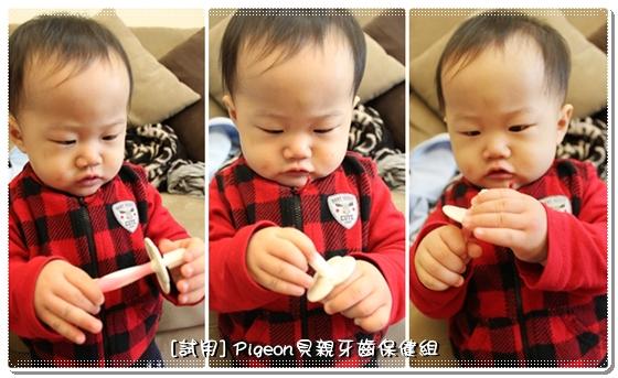 Pigeon_20.jpg