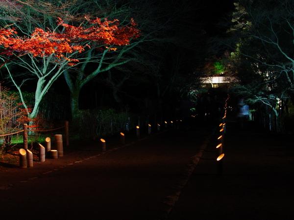 嵐山花灯路ー二尊院